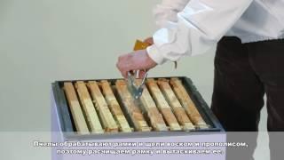 Урок пчеловодство 1 Тренер Дуйшеналиев Ж.Б.