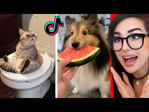 Cute Animals on Tik Tok That Will Make You Laugh