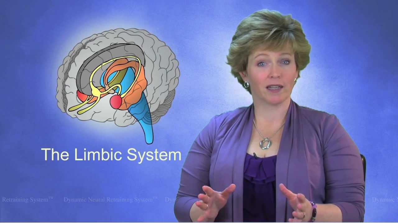 Limbic System - YouTube Limbic System Add