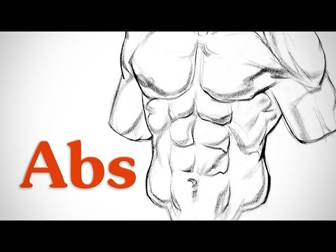 How to Draw Abs - Anatomy