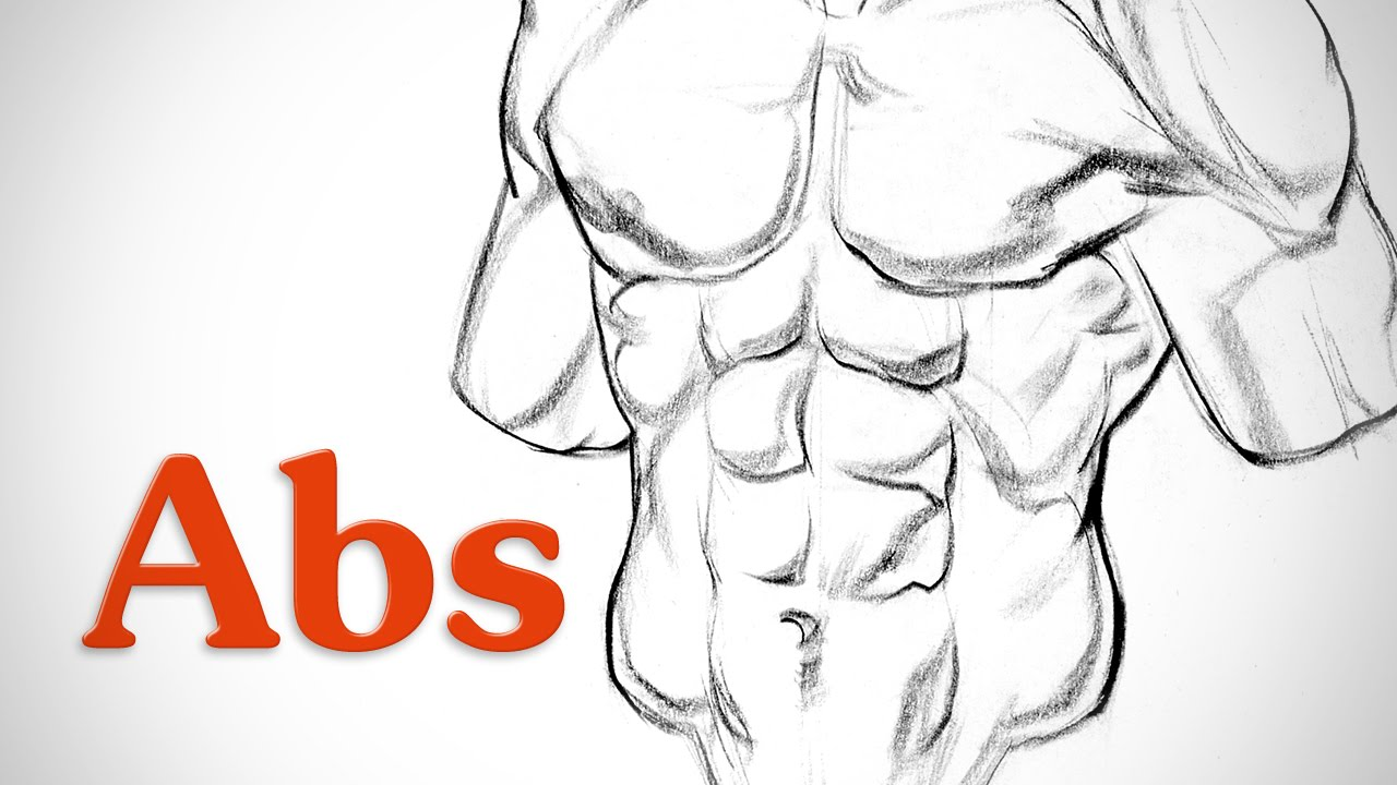How To Draw Abs Anatomy Youtube