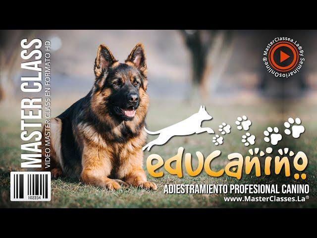 Educanino - Curso COMPLETO de adiestramiento.
