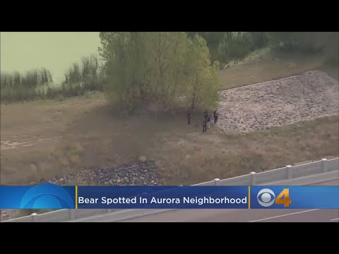 Bear Spotted In Aurora Neighborhood