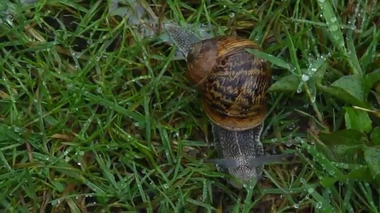 Toto l 39 escargot a tire d 39 l le jardin en chant de mimi alias chic lidee p1410160 youtube - Toto l escargot ...