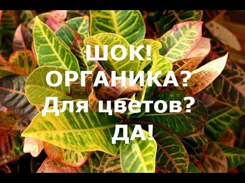 Вопрос: Какие есть универсальные органические удобрения для комнатных цветов?