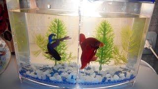 Что такое нано_аквариум, для чего он нужен. Уход, рыбки, растения для нано аквариума. Часть 1