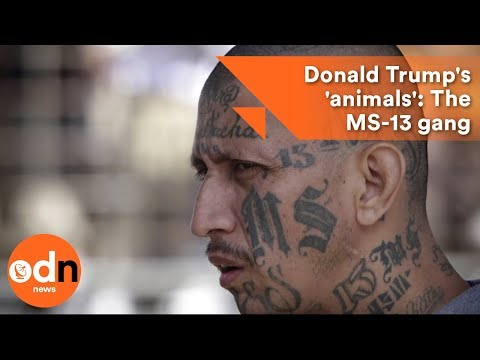 Donald Trump's 'animals': The MS-13 gang explained