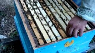 Апарат за производство на пчелни майки