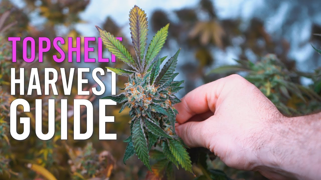 Download 6 CRUCIAL Steps to Top Shelf Harvests