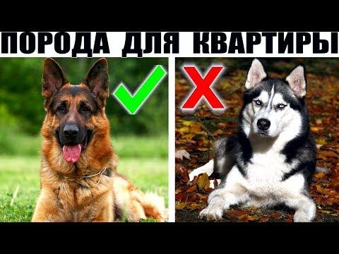 Породы собак для квартиры – 15 лучших вариантов | 360x480