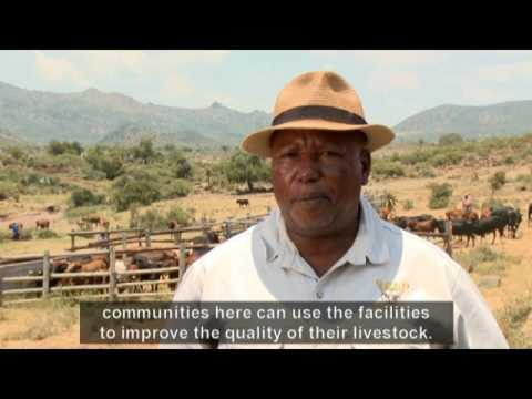 Living Land - Episode 6: Improving Livestock health