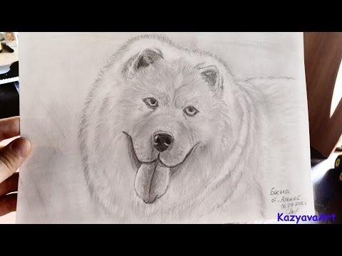 Как рисовать собаку, how to draw a dog