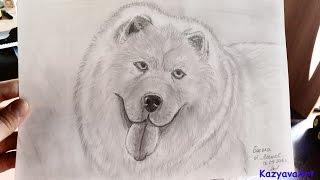 Как нарисовать собаку. Чау Чау. How to draw a dog // Рисунки карандашом #7(Очень важный момент для меня, я рисую с фотографии. Долго решалась, выкладывать или нет.И все таки решила...., 2016-09-07T23:40:44.000Z)