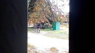 Пьяный на велосипеде(Отпало колесо., 2015-01-27T17:17:09.000Z)