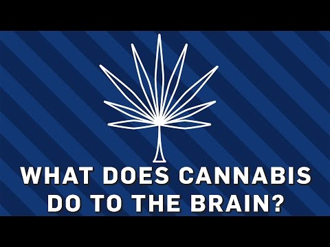 What Does Cannabis Do To The Brain? - Brit Lab
