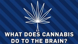 What Does Cannabis Do To The Brain? | Brit Lab