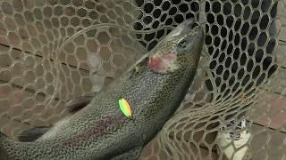 Азбука спиннинговой ловли. Ловля форели в спорт-зонах