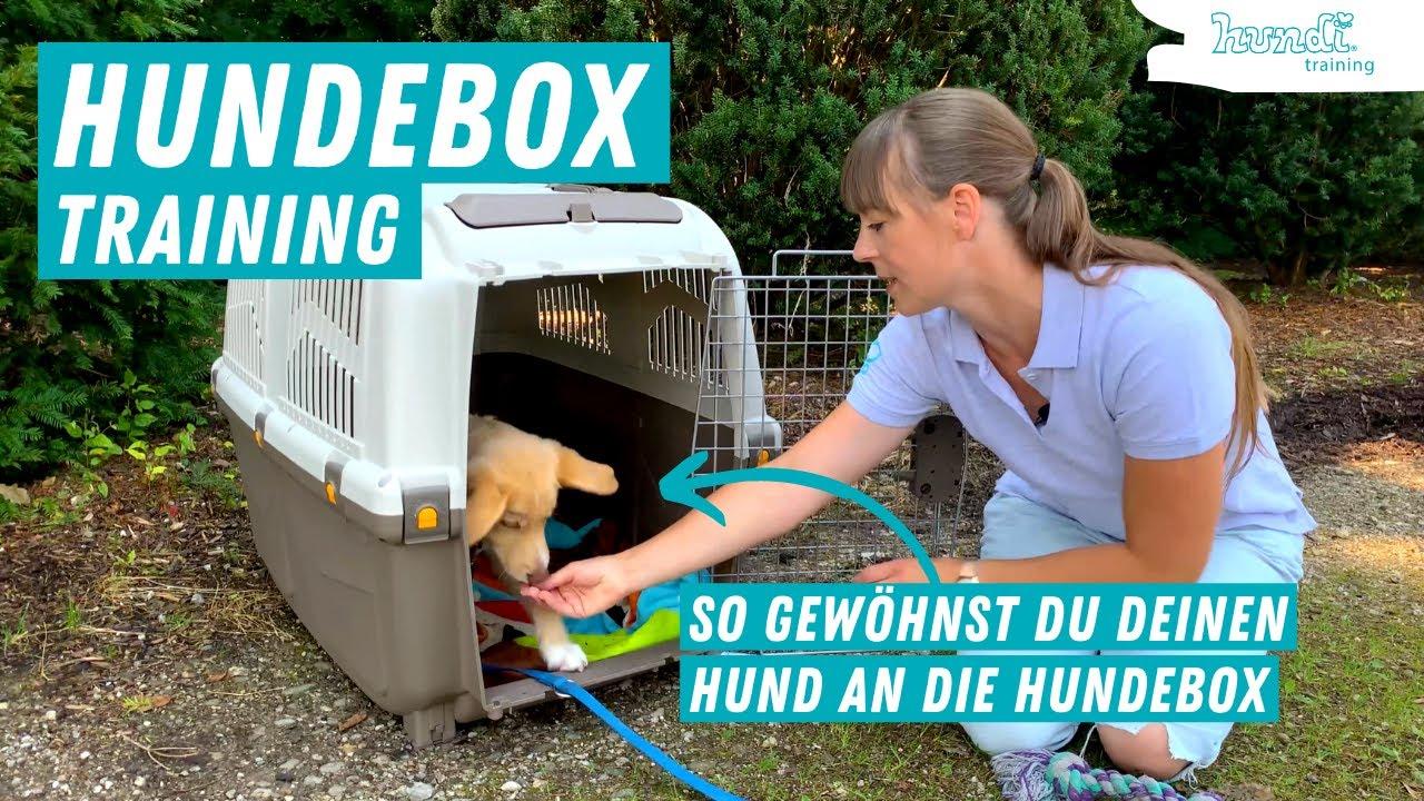 Hundebox Training   Wie gewöhne ich den Hund / Welpen an die Hundebox