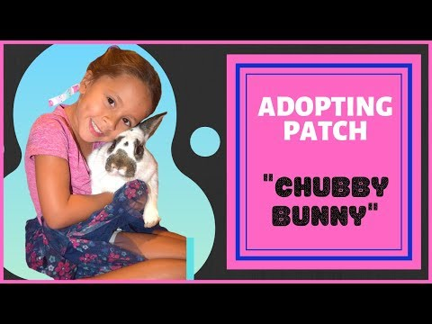 Adopting A Rabbit From OC Animal Care Shelter- CHUBBY BUNNY