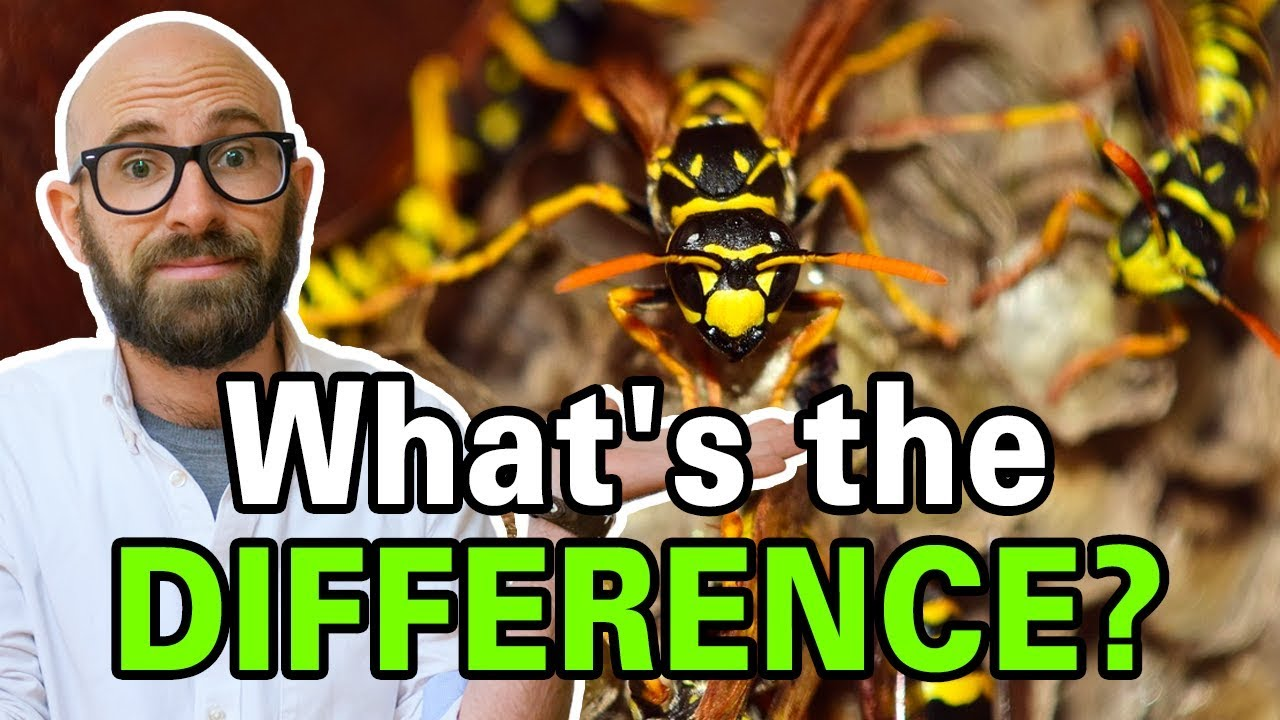 Download What is the Difference Between Bees, Wasps, and Hornets?