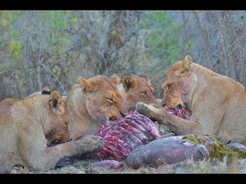 African Wildlife HD Part 2 - Kruger Park - South Africa Travel Channel