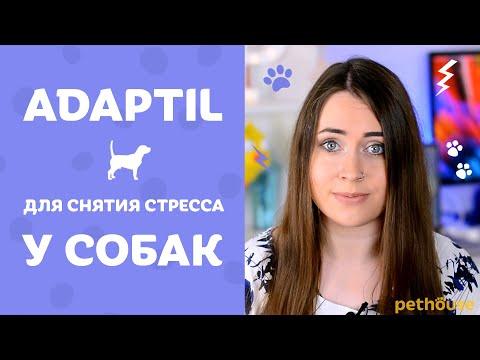Как помочь собаке при СТРЕССЕ? Линейка средств Адаптил | Adaptil обзор от Pethouse.ua
