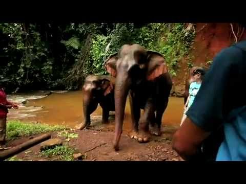 Elephant Valley Project, Mondulkiri, Cambodia.