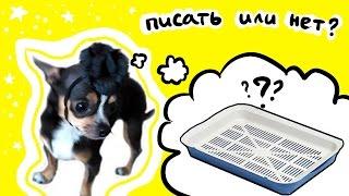 Как научить щенка писать на пеленку или в лоток