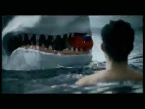 Great White Shark Wallpaper Cute Funniest Great White Shark In The World Youtube