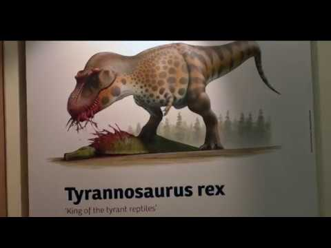 Cambridge Scientist makes Dinosaur Discovery