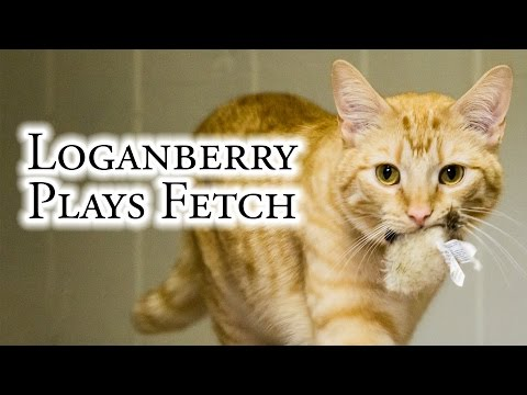 Loganberry Plays Fetch