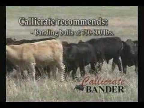 Advantages of The Callicrate Bander
