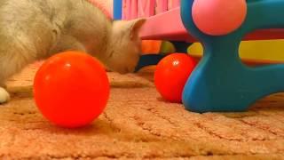 Funny kitten Masya  with balls