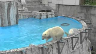 ララの背伸びジャンプと落ちた子グマ~Polar Bear's mother & Daughter