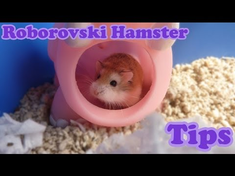Escape Challenge  Room With A Hamster