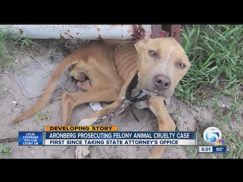 Pit bull animal cruelty case goes to trial