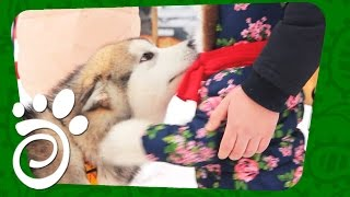 Дети И Собаки: Знакомимся И Вместе Катаемся . Все О Домашних Животных