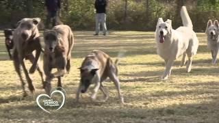 Amores Perros y Otros Amores en Caninus