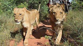 アフリカ南部ザンビアのリビングストンにある「ムクニ・ビッグ5・サフ...