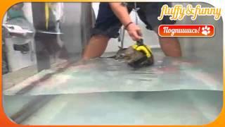 Cat water treadmill, кот в воде на беговой дорожке