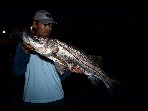 Fishing Bridges For Florida's #1 Game FISH! - SNOOK FISHING