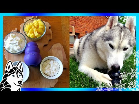 DIY PINA COLADA KONG FOR DOGS  | Frozen Dog Treats | Snow Dogs Snacks 74 | DIY Dog Treats