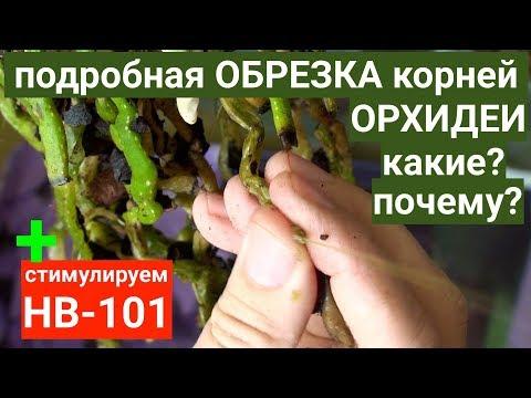 Вопрос: Какие микро-фаленопсисы долго цветут, доращивают цветоносы Названия?