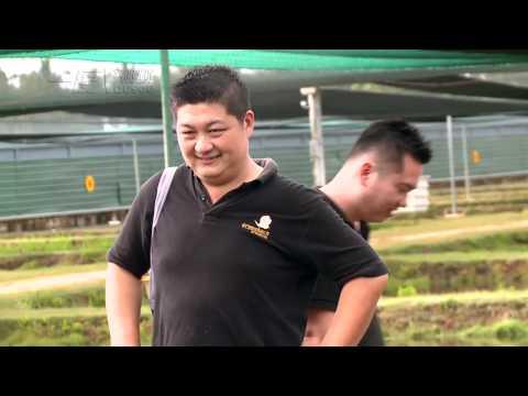 Crossback Arowana Farm Bukit Merah