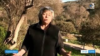 La Xylella fastidiosa en Corse