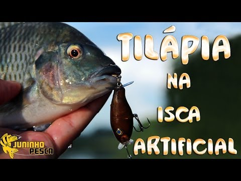 Ep 4 til pia na isca artificial for Is tilapia a fake fish