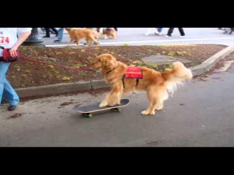 2011 Portland Doggie Dash For OHS
