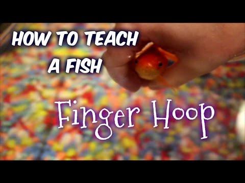 How To Teach A Fish: Swim Through Finger Hoop