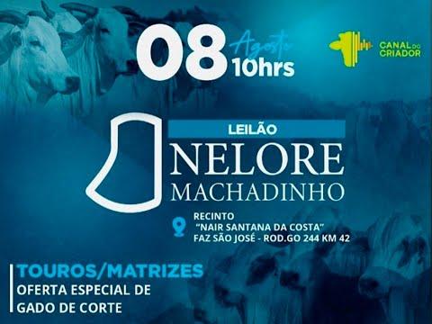 Lote 81   Nest FIV Machadinho   DIM A406 Copy