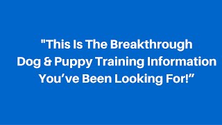 Dog Training Basics - Learn From The Expert !